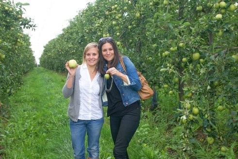 pommes ariane