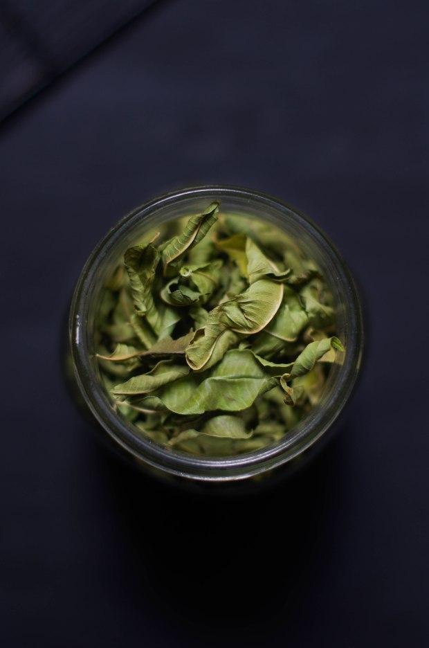 feuilles-verveine-verbena-leaves