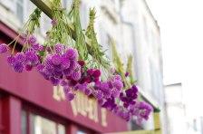 fleurs-marche-la-rochelle-2